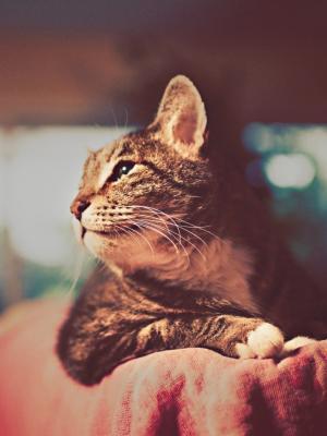 猫复古摄影手机壁纸