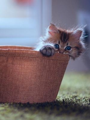 甜蜜的小猫散景移动壁纸