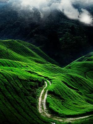 绿色山脉移动壁纸