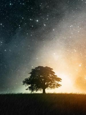 树夜移动壁纸