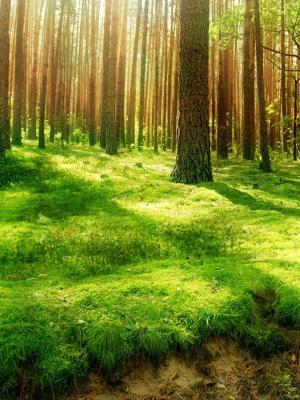 地球森林移动壁纸