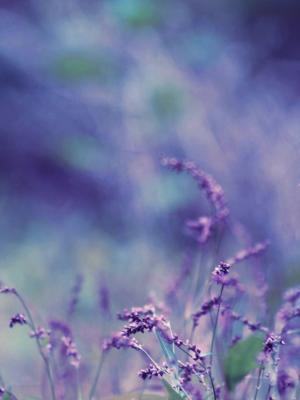 紫色的花散景移动壁纸