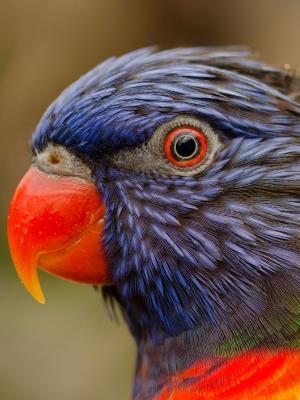 免费图片相关的鸟类手机壁纸