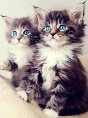 可爱的小猫2手机壁纸
