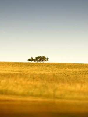 树领域手机壁纸