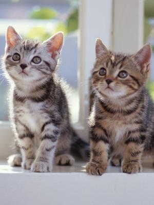 小猫虎斑手机壁纸