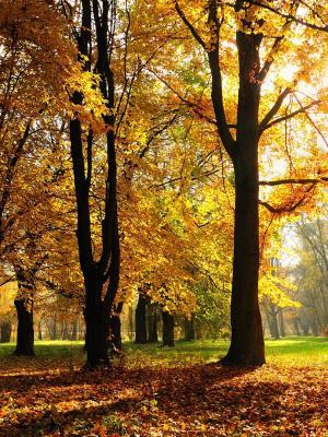 秋天的季节手机壁纸