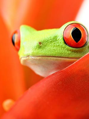 两栖类青蛙手机壁纸
