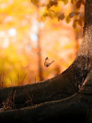 蝴蝶木移动壁纸