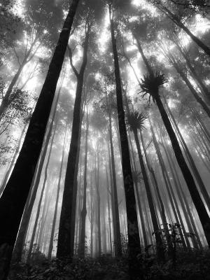 森林灰度神秘的手机壁纸