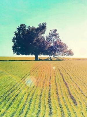 树在太阳移动墙纸