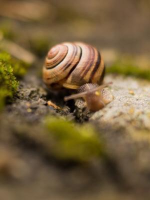 自然动物蜗牛宏手机壁纸