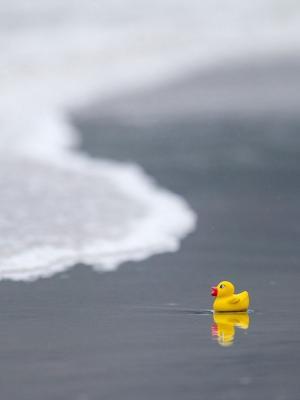 海沙滩鸭玩具手机壁纸