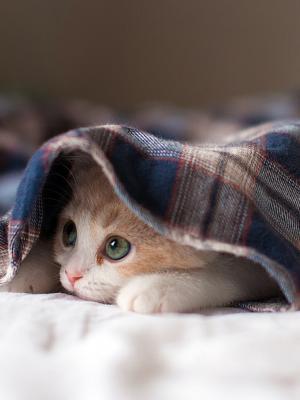 困小猫手机壁纸