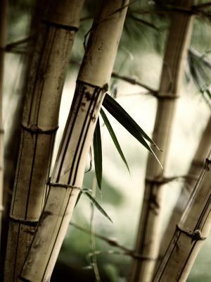 留下竹子手机壁纸