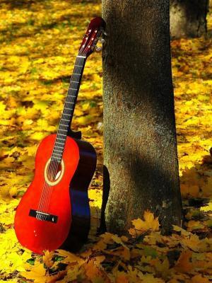 枫叶吉他手机壁纸