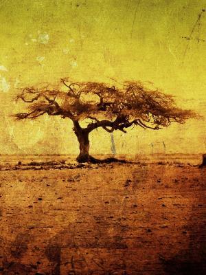 自然稀树草原移动壁纸
