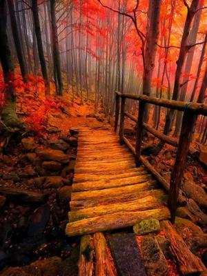秋天的路径移动壁纸