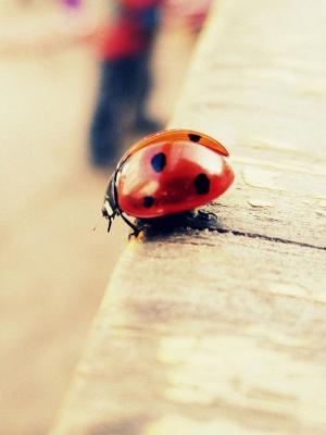 红色Bug手机壁纸