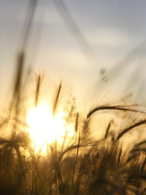 日出自然移动壁纸