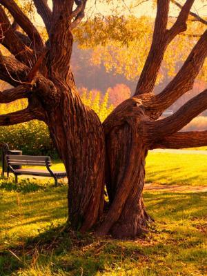 沿着神奇树手机壁纸的秋季长凳