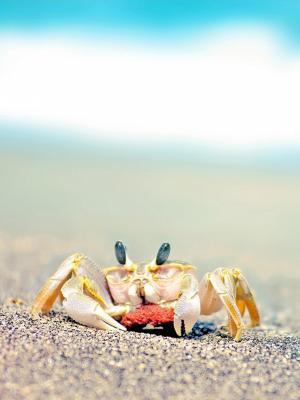 海滩螃蟹手机壁纸