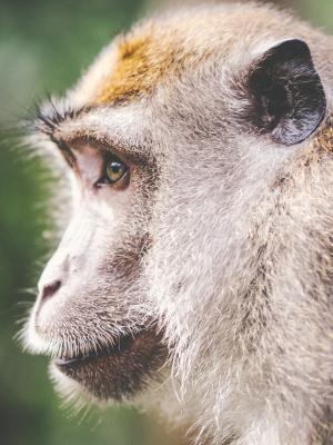 动物荒野动物园猴子手机壁纸