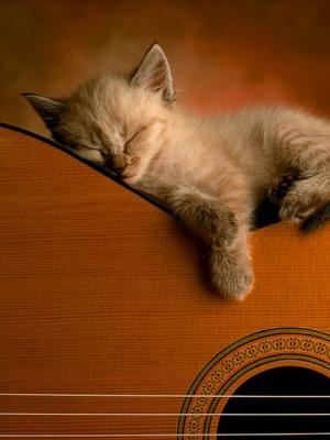 午睡时间猫手机壁纸