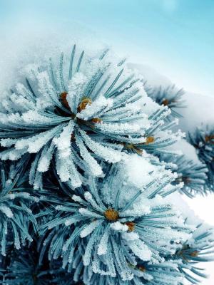 SnowFrozen手机壁纸