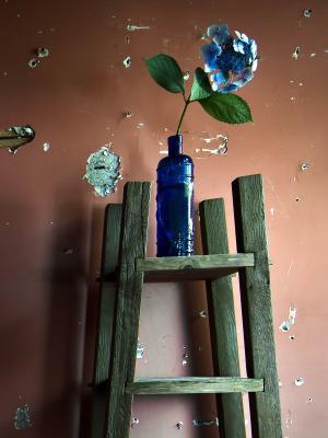 cvety丁基stena移动壁纸