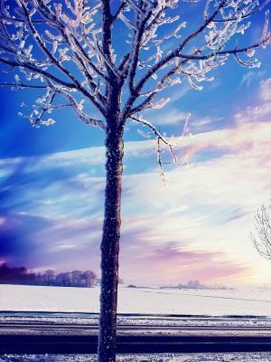 雪冬天树移动墙纸