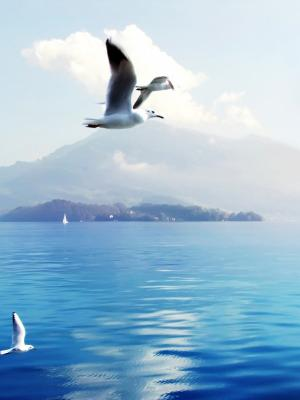 在瑞士的海鸥手机壁纸