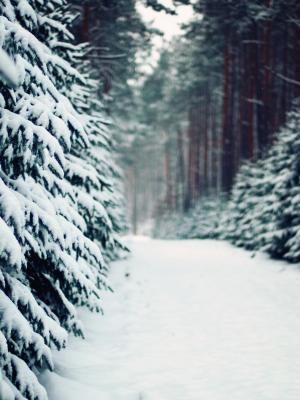 景观冬天雪移动壁纸