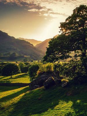 风景大自然树手机壁纸