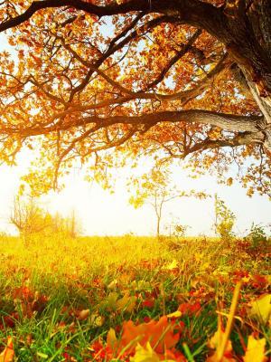 秋季草手机壁纸