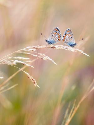蝴蝶手机壁纸