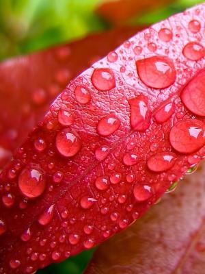 粉红色的叶子手机壁纸上的水泡沫