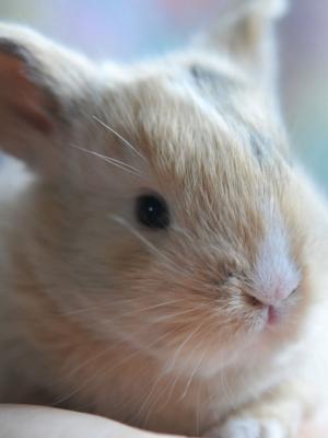 可爱的宝贝兔子手机壁纸