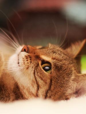 可爱的猫爪子移动壁纸