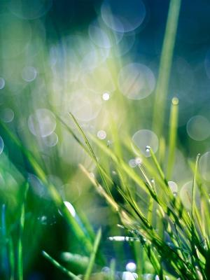 自然草移动壁纸