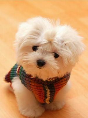 小狗手机壁纸