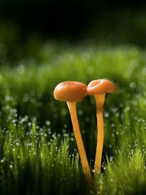 蘑菇手机壁纸