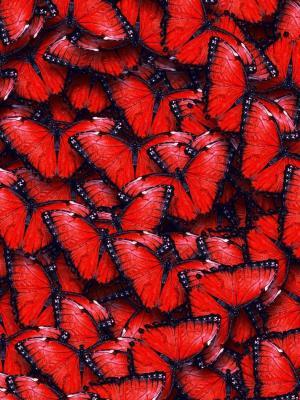 红色的蝴蝶手机壁纸