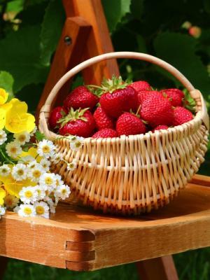 草莓和小雏菊移动壁纸