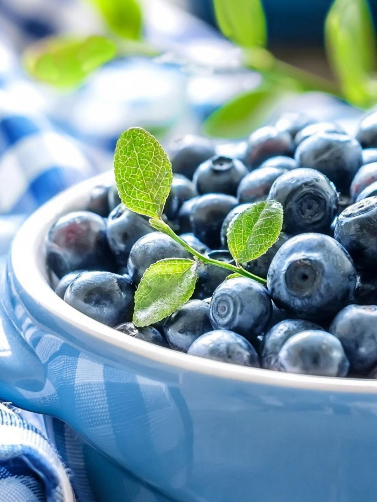蓝莓叶子手机壁纸高清原图查看